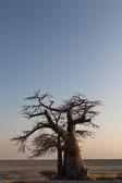 Botswana Collection
